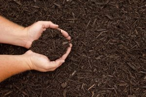 Step 5 of Boulevard Blend Application: apply landscape cover such as mulch