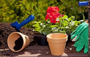 potting-soil-pots