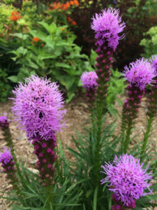 Mulch Perennial Garden