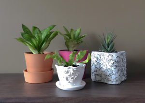 group of houseplants