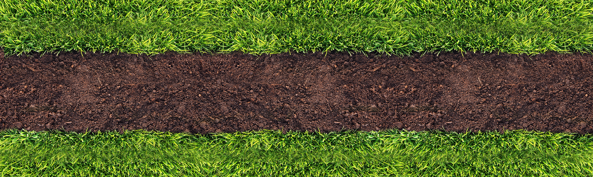 Lawn and soil